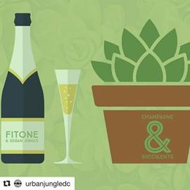 #Repost @urbanjungledc with @repostapp ・・・ On Saturday February 18 Join Urban Jungle and #FitOne for a special event, Champagne & Succulents. We are excited to be working with #fitoneoldtown in #Alexandria to run this special workshop! Sip 🥂 and learn how to make your own succulent garden. The event will be held at FitOne Alexandria 814 N St Asaph St, Alexandria, VA 22314! $65.00 Registration includes champagne and supplies for garden!