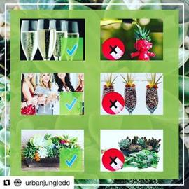 #Repost @urbanjungledc with @repostapp ・・・ We are excited about heading out to @fitoneoldtown in a few hours we just wanted to remind people of a few dos and don't for the event! Please DO enjoy your #champagne and your #succulent planting but please DON'T water trolls with champagne, or plant succulents in champagne flutes, we also ask that you DON'T break champagne bottle to plant your succulents in! Other than that let's have fun!!!
